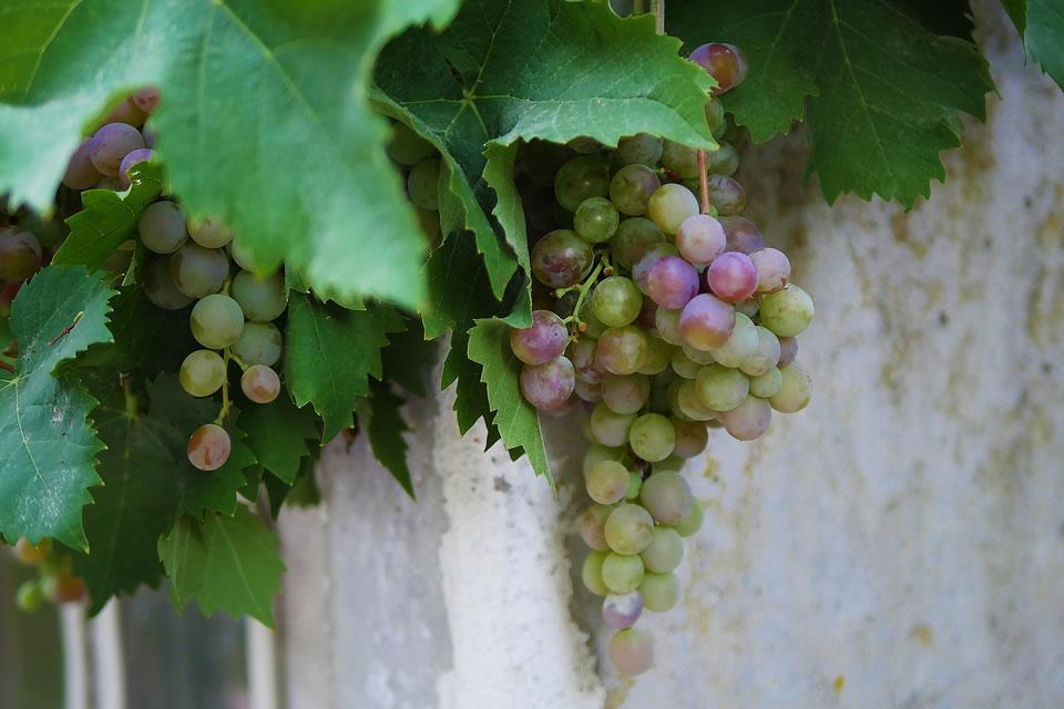 Wine Tour Etna Nord